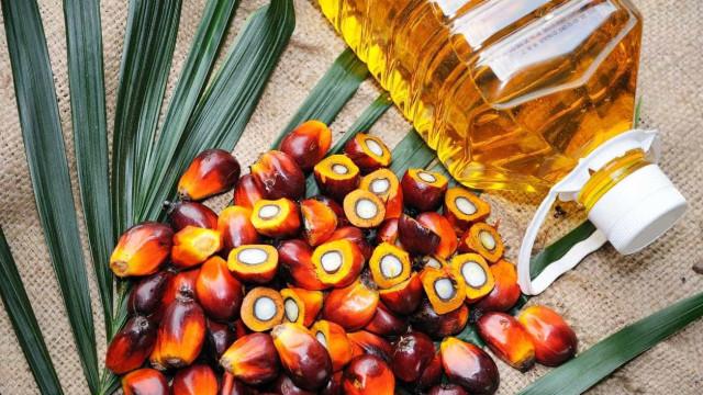 Indonésia pede à UE para suavizar normas para o óleo de palma