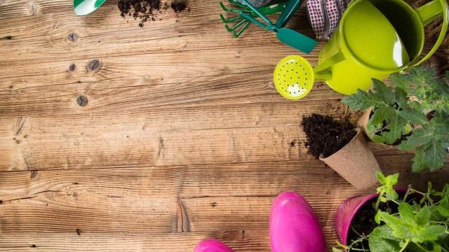 Ter plantas em casa torna-o mais...arrumado