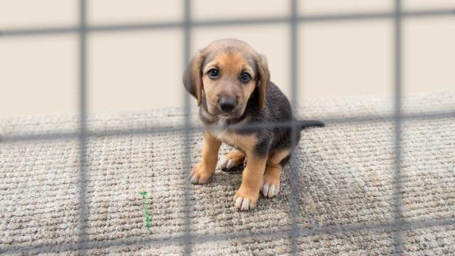 UTAD cria ferramenta online que facilita adoção de animais abandonados