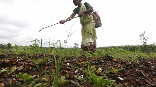 Serpa deixou de usar glifosato para controlar ervas daninhas do concelho