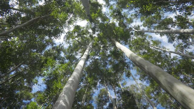 Vila Real reclama medidas imediatas e apoios financeiros para a floresta