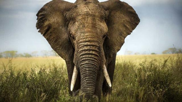 """Elefante foge de circo para """"curta e pacífica excursão"""" em cidade alemã"""