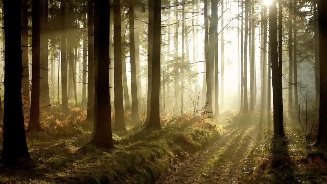Saiba o que é proibido fazer na floresta a partir de hoje