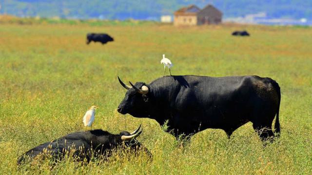 Ilhas Baleares proíbem maus tratos e morte de touros