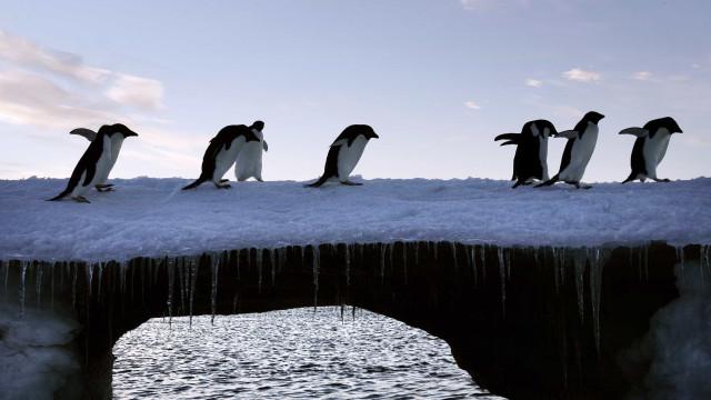 Antártida: Escolhas na próxima década com efeitos irreversíveis no mundo