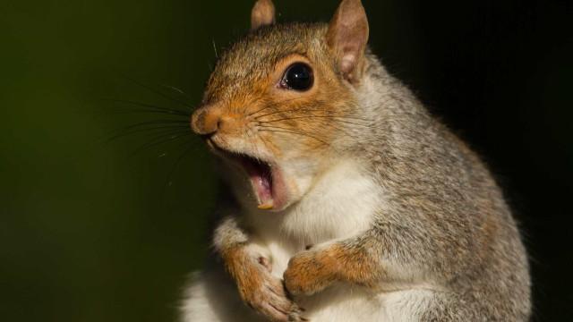 Esquilo raivoso ataca cinco pessoas em Nova Iorque