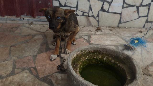 Defesa dos Animais quer educação para prevenir maus-tratos