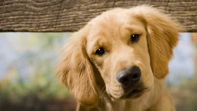 Tem cães? Então, olhe-os nos olhos. Pode salvar-lhes a vida