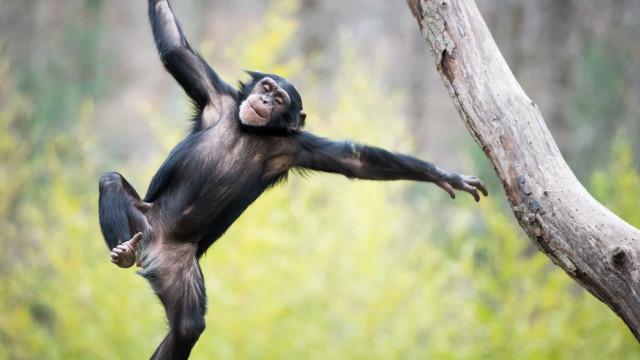 Mulher de 60 anos morre na Índia ao ser perseguida por macacos