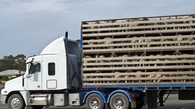 PCP, PS, PSD e CDS-PP contra nova legislação sobre transporte de animais