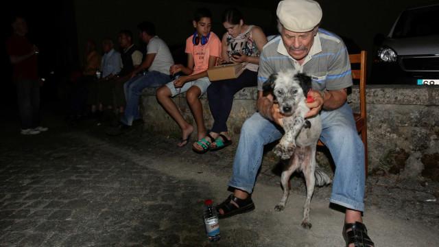 SOS Animal faz apelo para ajudar animais afetados pelos incêndios