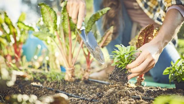 Têxtil de Famalicão tem horta biológica para alimentar funcionários