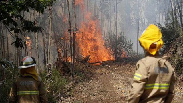 Saiba o que fazer se for surpreendido por um fogo florestal