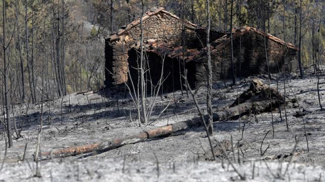 Mais de 500 mil hectares de culturas agrícolas afetados pelos incêndios