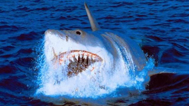Os melhores filmes com predadores aquáticos