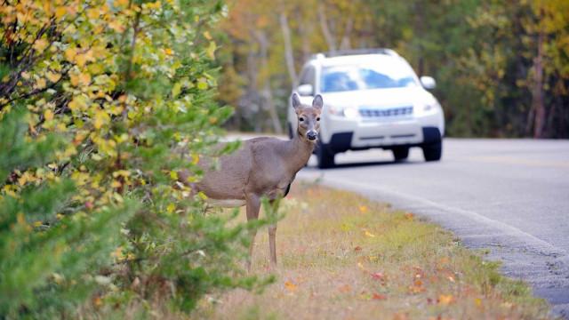 Mais de 2.400 animais atropelados nas estradas em 2016