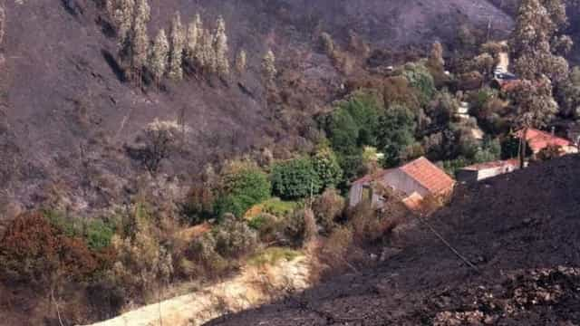 Figueiró: Quinta resistiu a fogo graças a castanheiros e oliveiras