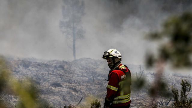 Homem morre carbonizado em fogo no povoamento florestal em Abrantes