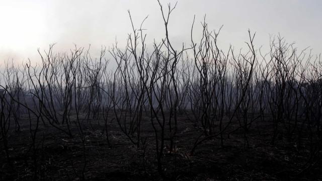 PSD quer distrito de Castelo Branco no projeto-piloto de reflorestação