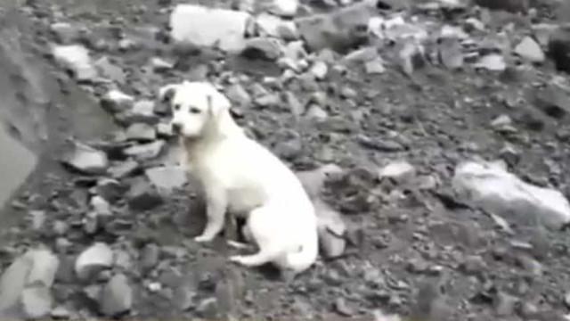 Cão recusa abandonar destroços à espera do dono desaparecido