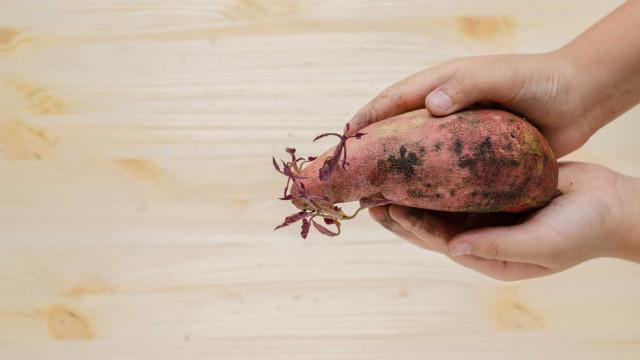 É seguro comer batatas que já têm grelos?