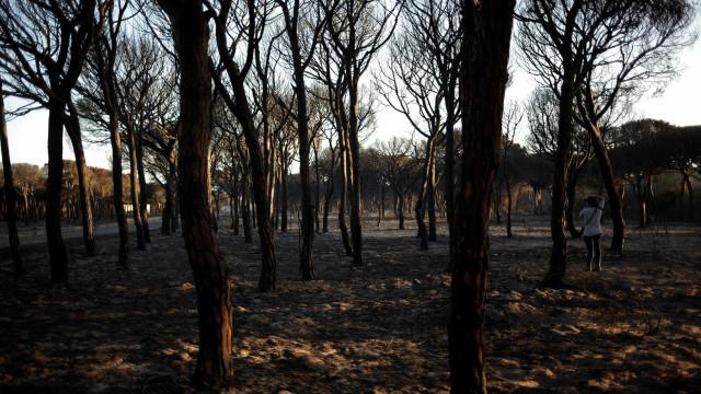 Fogo de Huelva afetou 8.486 hectares de mato e zonas arborizadas