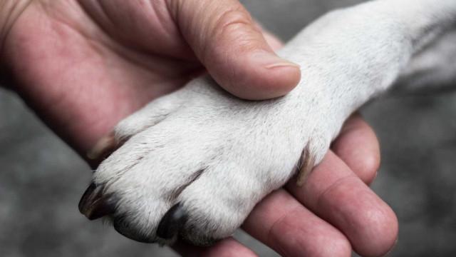 Família reencontra cadela que estava desaparecida há cinco anos