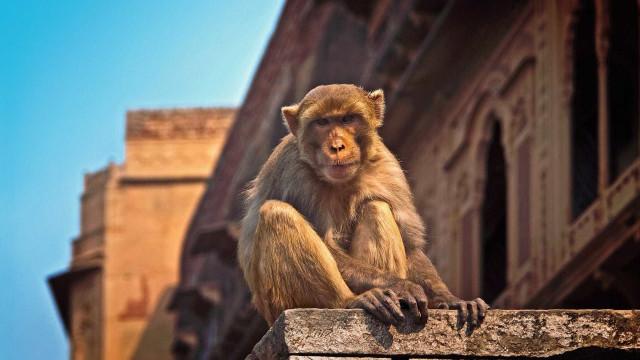 Bebé com 12 dias morto por macaco na Índia