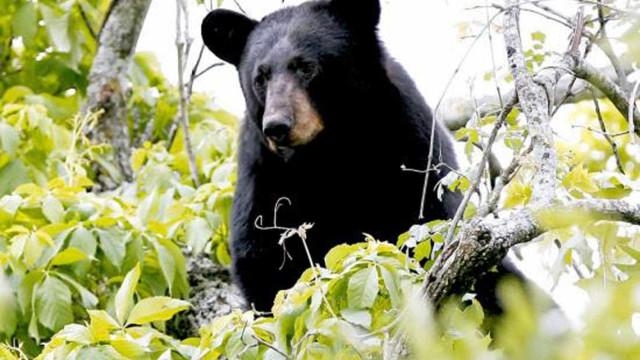 Menino de três anos desaparecido 48h ao frio diz que urso cuidou dele