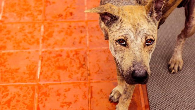 Condenado a prisão por manter cadela sem comida e sem água