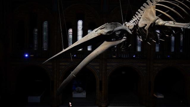 Museu de História Natural britânico acolhe novo 'anfitrião'