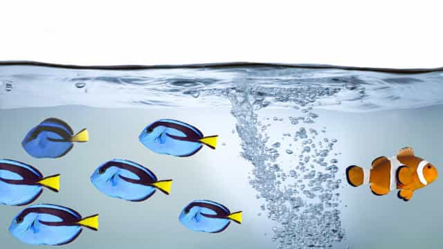 Há um erro em 'À procura do Nemo'. Marlo devia ser Marlene