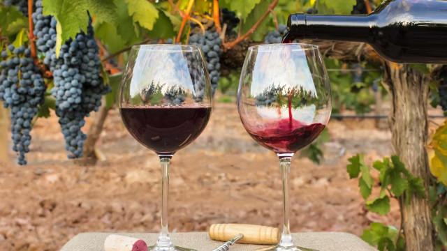 Investigadores usam antioxidantes do vinho em cosméticos para a pele