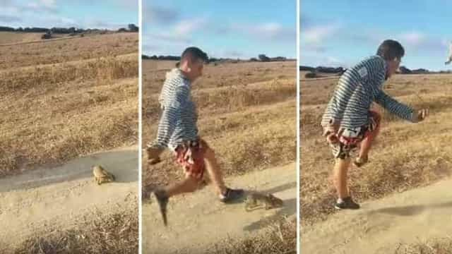 """Polícia espanhola procura """"desalmado"""" que se filmou a pontapear coelho"""