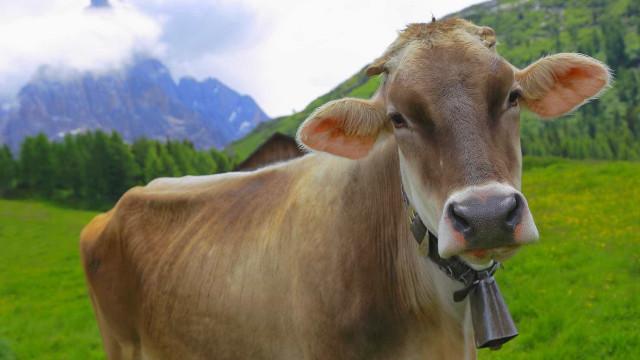 Sibéria vai receber 5.000 vacas da Danone para controlar preços do leite
