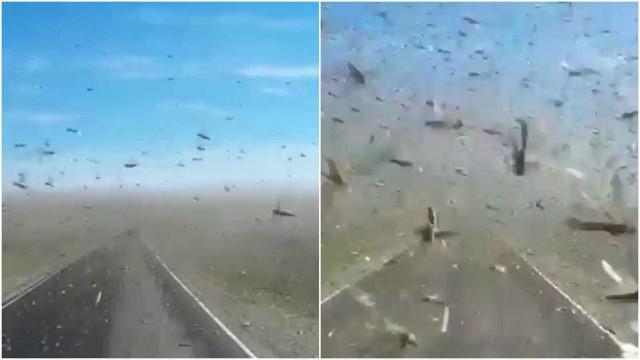 Invasão de gafanhotos provocou o caos numa estrada na Rússia