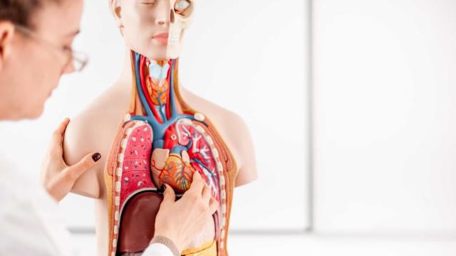 Descoberto método inovador para formar vasos sanguíneos no coração