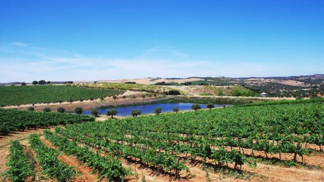 Festa da Vinha e do Vinho reúne produtores do Alentejo em Borba