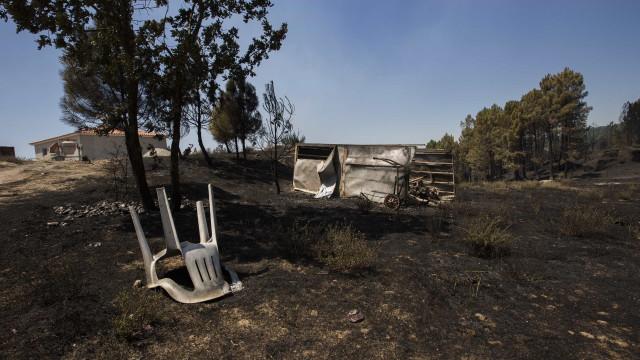 Incêndios: Colónia de grifos nas Portas de Ródão reduzida a metade