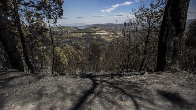 Algarve, Norte e Centro com risco muito elevado a máximo de incêndio