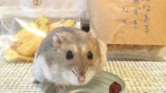 Jovem deita hamster impedido de entrar no avião pela sanita
