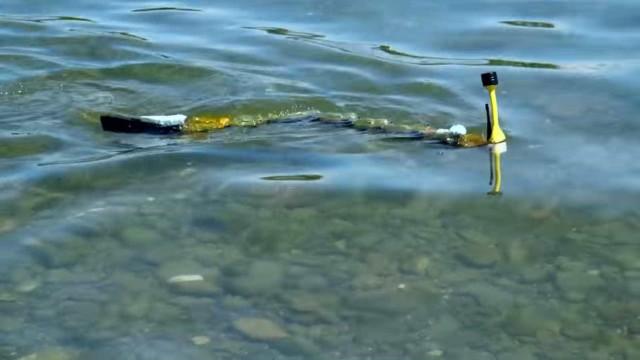 Esta enguia robótica é capaz de apontar a origem da poluição em rios