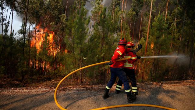 Carro incendiou-se na A3 e fogo alastrou à floresta. Foi logo dominado