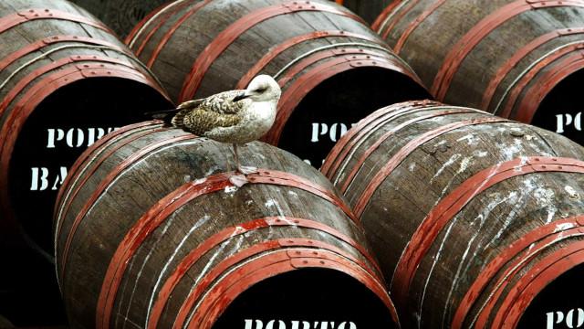 Ministério define castas aptas para os vinhos 'Porto' e 'Douro'