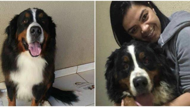 Fotógrafa vende objetos personalizados para pagar cirurgia do cão