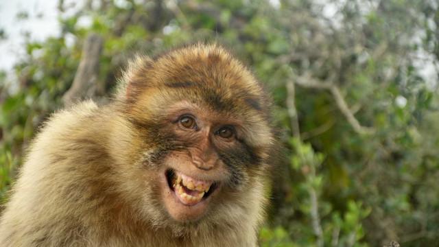 Pai e filho atacados por grupo de macacos