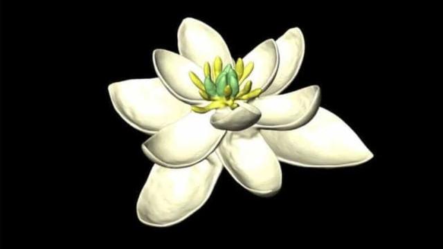 Terá sido esta a primeira espécie de flor do mundo