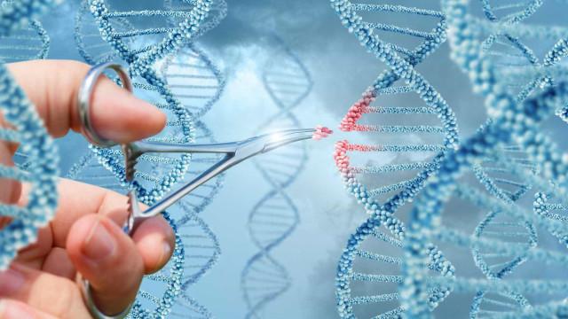 Cientistas editam genoma de porco para eliminar vírus