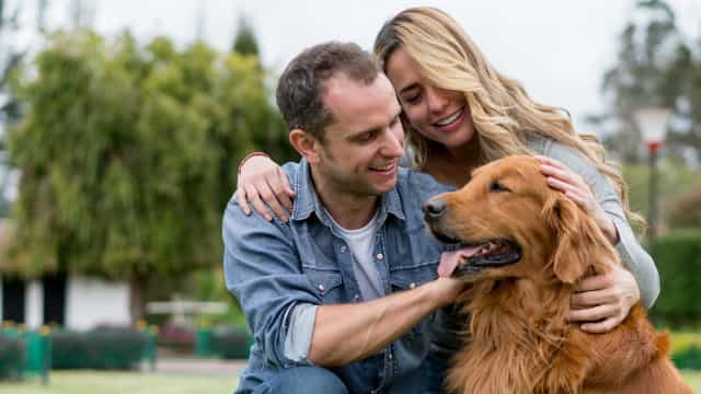 Ser o melhor amigo está no ADN, mas há cães mais sociais do que outros