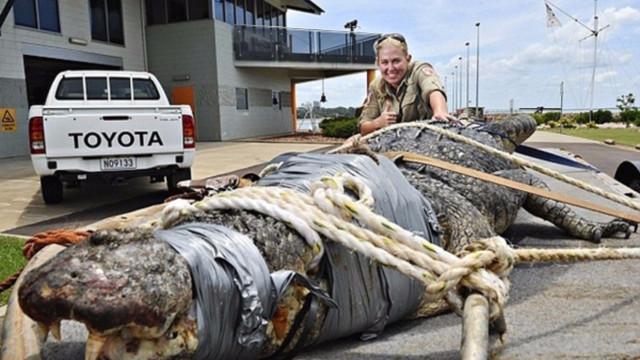 Alguns dos animais mais assustadores (e perigosos) da Austrália